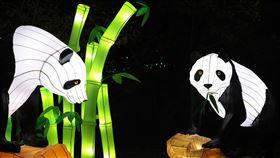 華府動物園燈光秀開幕 濃厚節慶味吸引大批民眾美國華府的史密森尼國家動物園29日延續多年傳統,推出為期一個月左右的動物燈光秀,今年活動一大亮點為多盞大型動物造型燈籠。圖為熊貓造型燈籠。中央社記者徐薇婷華盛頓攝 108年11月30日