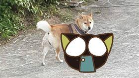 爆怨公社,有網友拍下疑似虐狗的照片,其實是防狗追車神器。(圖/翻攝自爆怨公社)