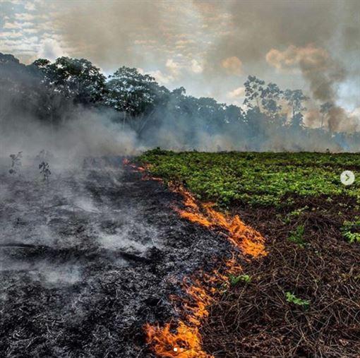 李奧納多 亞馬遜雨林/IG