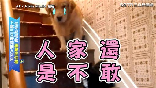▲黃金獵犬害怕的模樣。(圖/AP/Jukin Media 授權)