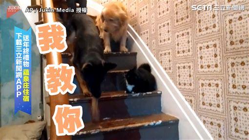 ▲主人家中比牠瘦小的小黑狗教黃金獵犬怎麼下樓梯。(圖/AP/Jukin Media 授權)