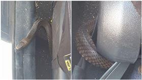 澳洲發生東部棕蛇藏車事件,世界第二大毒蛇,讓母子嚇到。(圖/翻攝自臉書)