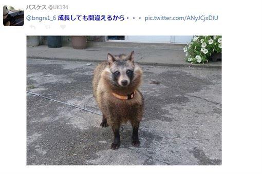 收養5貓遭獸醫打臉是狗,結果是日本狸(圖/翻攝自推特)