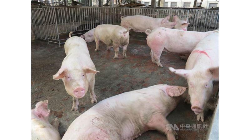 立院三讀 故意散播動物傳染病謠言最重罰100萬
