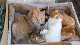 居民守護210貓島浪喵過冬 手作蘇胡貓窩…看到就從心裡暖起來 (圖/翻攝自臉書 猫の島 青島物語 Cat Island Aoshima)