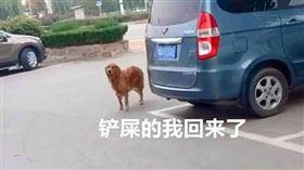(圖/翻攝自微博)中國,黃金獵犬,金毛,紙條,包子