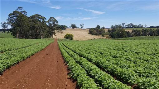 澳洲農場 示意圖