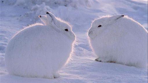 傳說月亮上有玉兔? 神很大報你知!