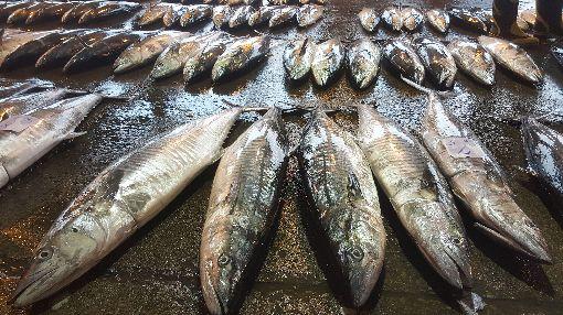 冷氣團帶來土魠魚 澎湖漁獲量多冷氣團來襲,土魠魚也隨著鋒面南下,澎湖漁船出海大有斬獲,馬公漁市場11日可見滿滿的土魠魚。中央社 108年12月11日