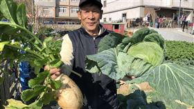 馬祖冬季特產 蔬菜3寶開始採收(1)經過3個多月生長,北竿(土反)里農地的蔬菜3寶高麗菜及白蘿蔔近日開始採收,再過一陣子大白菜也可採收。農民說蔬菜三寶是越冷品質越好,甜脆的口感絕對要比外地進口的好。(連江縣政府提供)中央社 108年12月12日