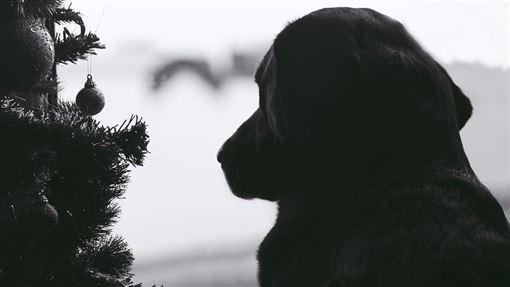 狗(示意圖/翻攝自pixabay)