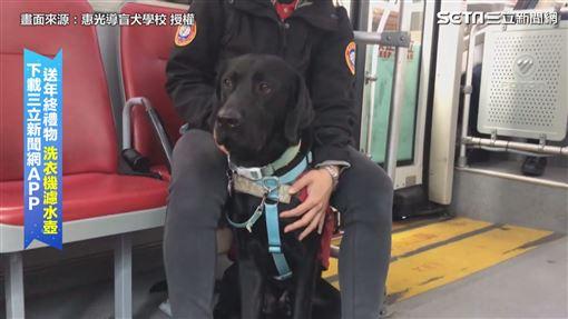 跟著超萌導盲犬出任務! 搭公車逛市場通通沒問題