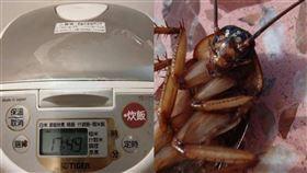 蟑螂,衛生習慣,婆家,電鍋,婆婆,老公,舊家具,人妻,崩潰