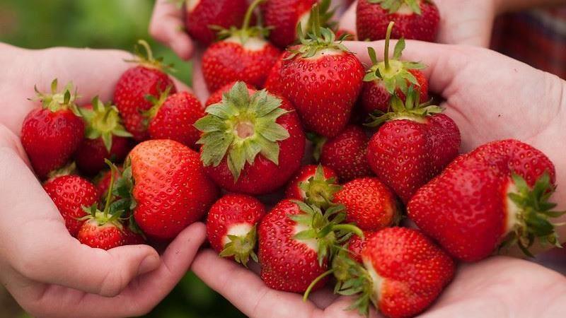 吃草莓竟可瘦腰?番茄瘦小腹?營養師曝「這樣吃」瘦身關鍵