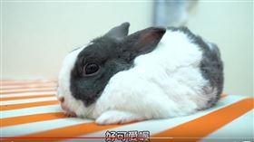 兔子,黃氏兄弟,翻攝自YT
