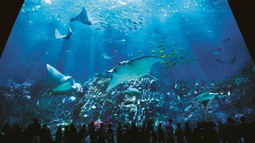 ▲在香港海洋公園可看到上千種海洋生物(圖/香港海洋公園)
