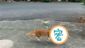 貓咪,雞,野性,加菜(圖/翻攝自加藤軍路邊隨手拍臉書)