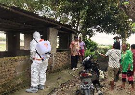 印尼宣布感染非洲豬瘟  採必要措施控