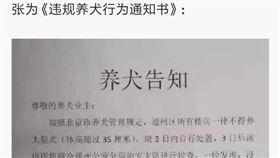中國歌手朴樹日前發微博指北京通州區要求飼主限期3天處理大型犬,否則發現後沒收,網上則傳出飼主排隊為小狗安樂死。(圖取自微博)