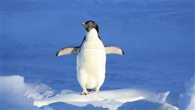 企鵝/pixabay