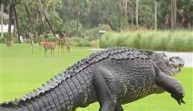 鱷魚,鹿,南加州(圖/翻攝自reddit)