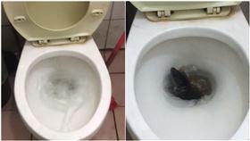 馬桶,上廁所,老鼠,米奇,沖水(圖/翻攝自爆費二館)