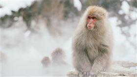 天氣、氣象、獼猴、猴子、寒冷、冷氣團、寒流/unsplash