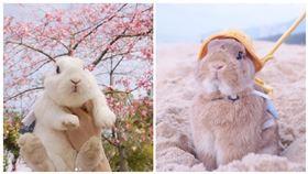兔子,IG:panpanbun 授權提供(勿二用)