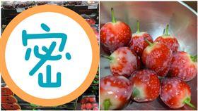 好市多掀起草莓風潮,民眾紛紛搶購。(圖/翻數自Costco好市多商品經驗老實說)