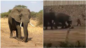 湖南,長沙,大象,動物園,馴養員,死亡(圖/翻攝自我們視頻)