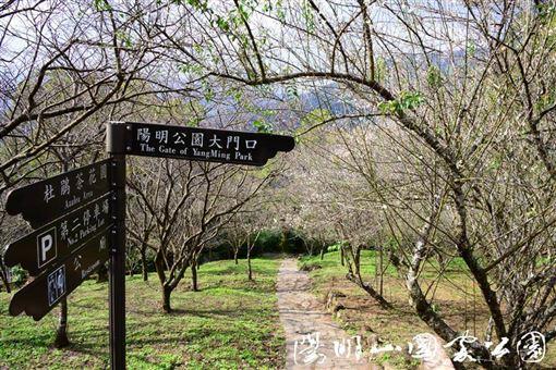 圖片來源:陽明山國家公園 梅花