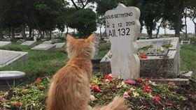 印尼波斯貓藍波墓碑前追念飼主印尼波斯貓藍波在飼主墓碑前追念他。印尼大學生法德希爾說,牠眼神空洞,在墓碑前靜靜坐了好久。(印尼大學生法德希爾提供)中央社記者石秀娟雅加達傳真 109年1月3日