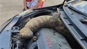 打開引擎蓋驚見巨大蜥蜴(圖/翻攝自Ake Srisuwan臉書)