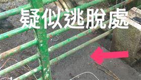 台東,利稻,廣原,小熊,脫逃,照養團隊,林管處(台東林管處提供)
