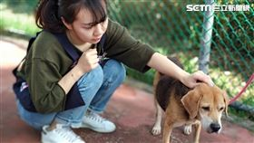 動物之家(新北市政府動物保護防疫處提供)