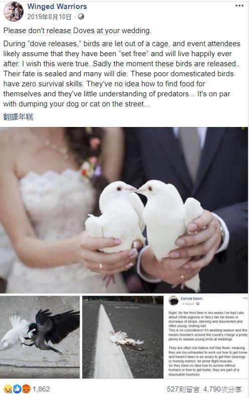 白鴿,結婚,儀式,典禮,鴿子