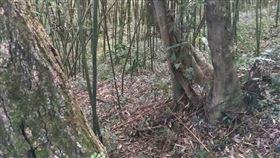竹林,內湖,三屍命案 翻攝畫面