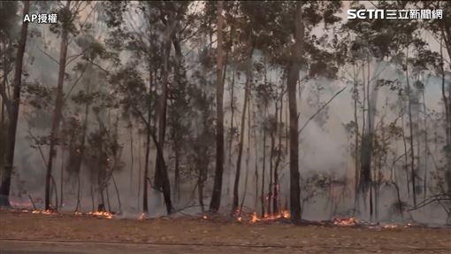 澳洲大火圖/AP授權