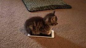 貓咪們在天氣寒冷的時候,都會窩在溫暖的地方取暖,比如被窩、紙箱等牠們最喜歡蜷縮在裡面睡覺或是休息。日前有位網友就在推特上發布了一張照片,照片中的小貓就坐在與牠一樣大小的手機上,好像正透過手機來取暖,這個可愛畫面上傳後,果不其然萌翻了眾多網友!(圖/翻攝自marinamiries推特)