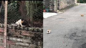 爆怨公社,有網友控訴鄰居亂餵養流浪貓,讓他環境超糟糕,車子花圃全都遭殃。(圖/翻攝自爆怨公社)