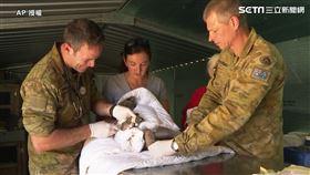 澳洲居民及陸軍獸醫也協助進行救援