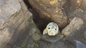 海豹外型圓滾可愛,絕對堪稱是世界上最可愛的海洋動物之一,而在野外遇到海豹的機會可不是人人都有!日前有位民眾在英國海岸發現了一隻海豹寶寶,但民眾發現這隻海豹寶寶竟然不怕人,拿起相機對牠拍了一陣子後,才發現原來這隻海豹寶寶卡在岩洞中動彈不得,這才連忙連絡救難人員。(圖/翻攝自St. Mary's Seal Watch Facebook)
