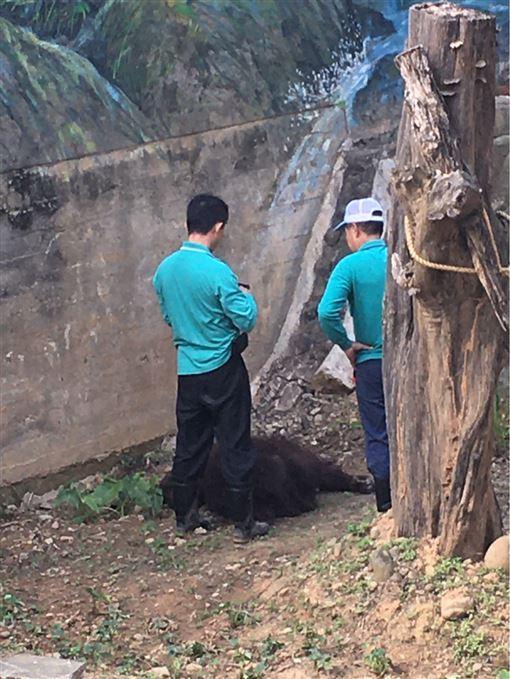 新竹,動物園,紅毛猩猩,死亡