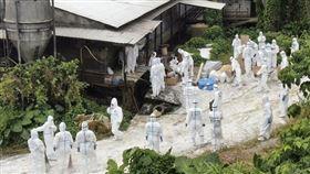 沖繩縣政府10日表示,已確認沖繩市內一處養豬場感染豬瘟,將撲殺場內飼養的2809隻豬,這是沖繩縣至今第3起豬瘟疫。圖為8日執行撲殺豬隻的防疫作業人員。(檔案照片/共同社提供)