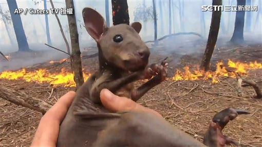 消防員救小袋鼠