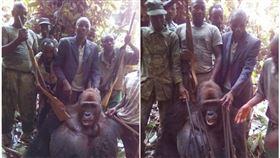 猩猩,剛果,需求,盜獵,威脅,獵殺,動保,獵槍,照片,法國,殘忍, 圖/翻攝自L'Association Gorilla臉書 https://parg.co/z4g