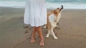 抖音,狗,台步,優雅(圖/翻攝自抖音)