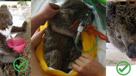 澳洲,無尾熊,肺炎,喝水,大火(圖/翻攝自臉書-動物界野生動物庇護所Animalia Wildlife Shelter)