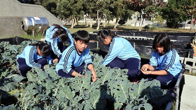 布袋國中落實食農教育 學生動手整地栽種販售