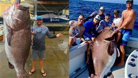 石斑,美國,海域,釣竿,漁夫,釣魚,巨型,背鰭,研究,年齡,魚, 圖/翻攝推特